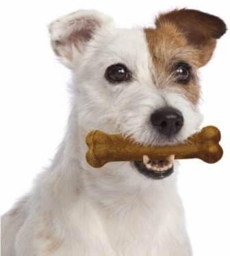 Can Dogs Eat Nylabones